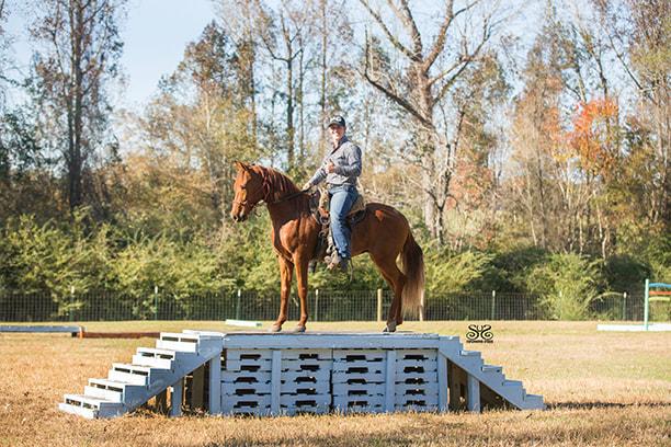 the-horse-guru-michael-gascon-gascon-horsemanship-10_orig