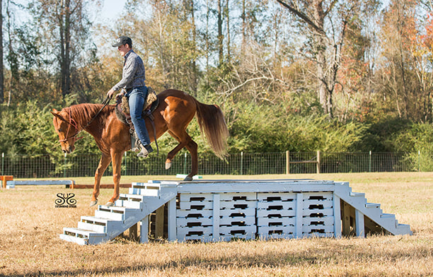 the-horse-guru-michael-gascon-gascon-horsemanship-11_orig