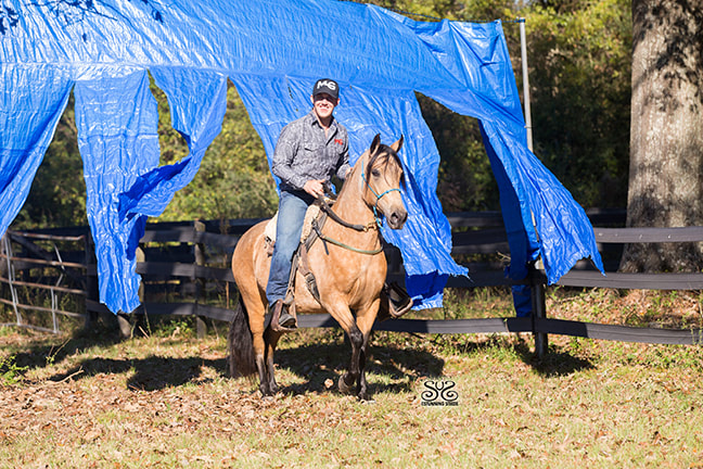 the-horse-guru-michael-gascon-gascon-horsemanship-12_orig