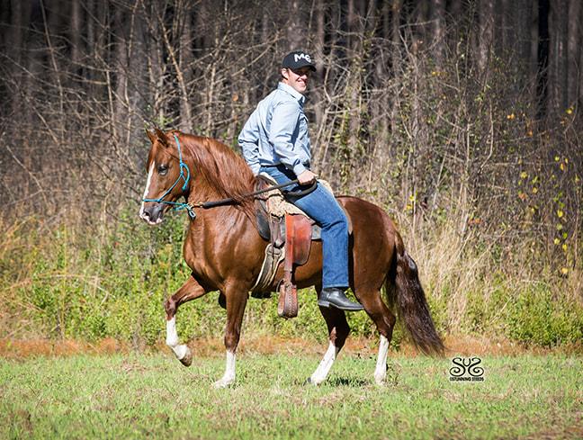 the-horse-guru-michael-gascon-gascon-horsemanship-7_orig