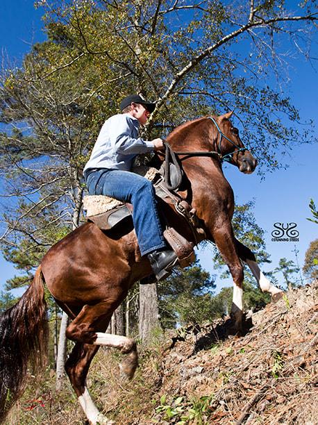 the-horse-guru-michael-gascon-gascon-horsemanship-8_orig