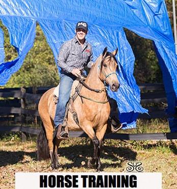 the-horse-guru-michael-gascon-and-gascon-horsemanship-10
