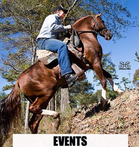 the-horse-guru-michael-gascon-and-gascon-horsemanship-6