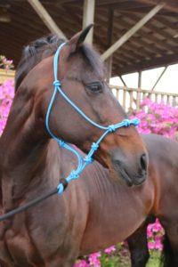 Gascon Horsemanship Halter
